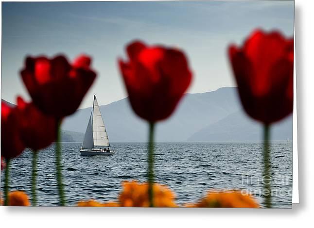 Sailing Boat And Tulip Greeting Card by Mats Silvan