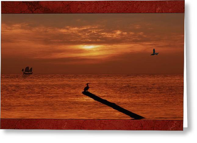 Tern Greeting Cards - Sailing Into The Sunset Greeting Card by Tom York Images