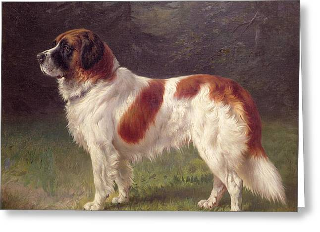 Prairie Dog Greeting Cards - Saint Bernard Greeting Card by Heinrich Sperling