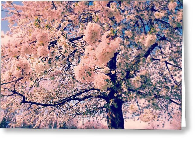 Soft Tones Greeting Cards - Sakura Summer Greeting Card by Danny Van den Groenendael