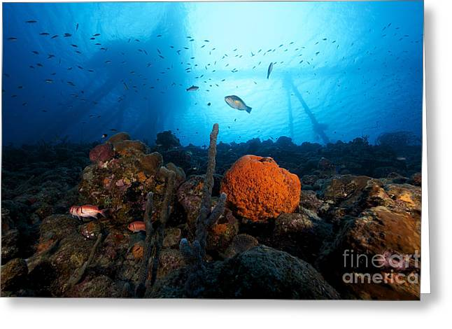Undersea Photography Greeting Cards - Salt Pier Seen Perched On Top Of Reef Greeting Card by Terry Moore