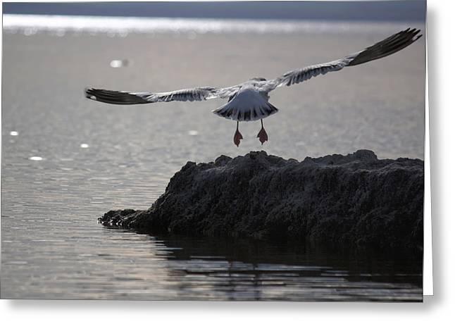 Sonny Bono Greeting Cards - Salton Sea Gull Greeting Card by Linda Dunn