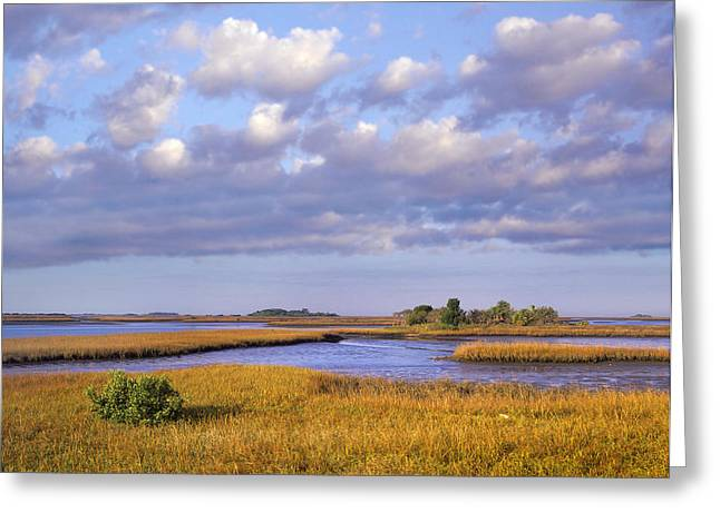 Cedar Key Greeting Cards - Saltwater Marshes At Cedar Key Florida Greeting Card by Tim Fitzharris