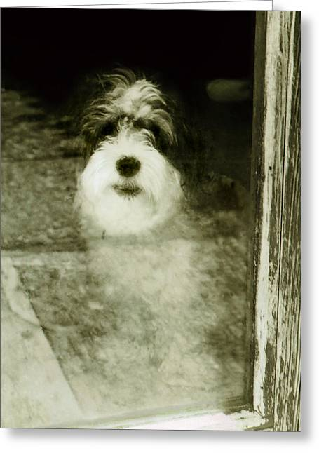 Button Nose Greeting Cards - Salty Dog Greeting Card by Mary Rath