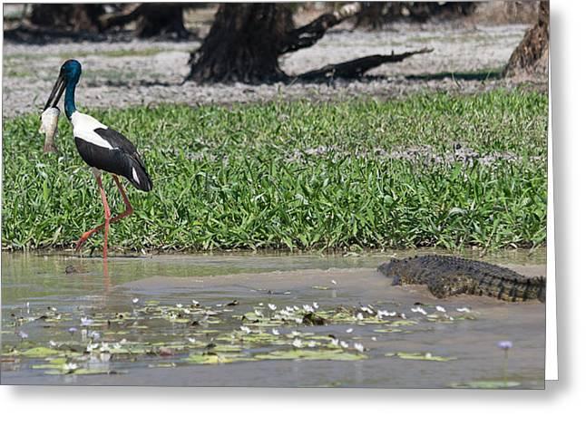 Mud Season Greeting Cards - Salty sneaking up on a black stork Greeting Card by Tilman Winkler