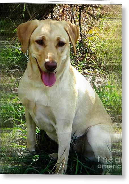 Retriever Prints Digital Art Greeting Cards - Sammie Greeting Card by Michelle Frizzell-Thompson