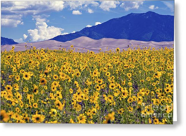 Great Sand Dunes National Preserve Greeting Cards - San Dunes Sunflowers Greeting Card by Scotts Scapes