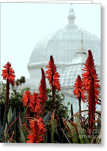 Bay Area Flowers Greeting Cards - San Francisco Conservatory of Flowers in Golden Gate Park . 7D5799 Greeting Card by Wingsdomain Art and Photography