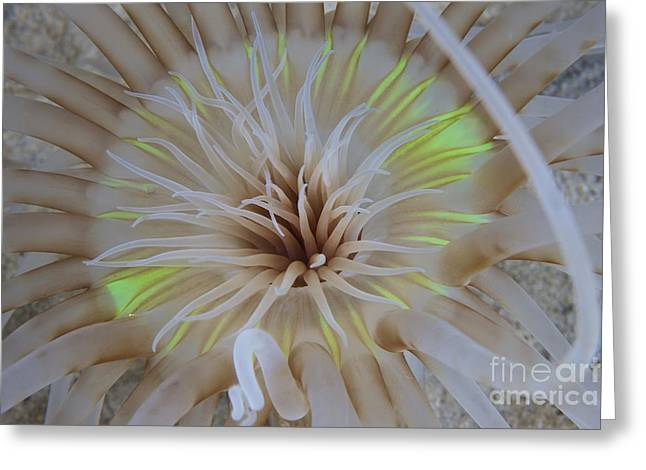Undersea Photography Greeting Cards - Sand Anemone With Flurescent Green Greeting Card by Terry Moore