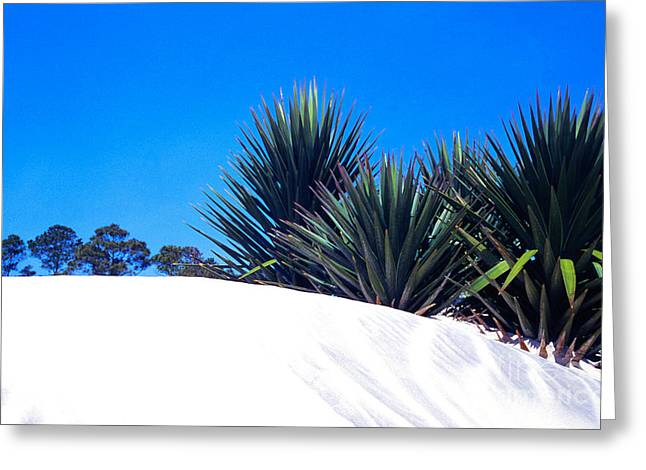 Sand Dune And Spanish Bayonet Greeting Card by Thomas R Fletcher