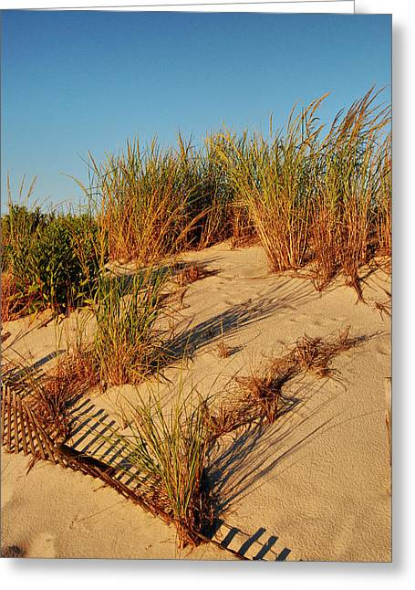 Plant Stretched Canvas Greeting Cards - Sand Dune II - Jersey Shore Greeting Card by Angie Tirado