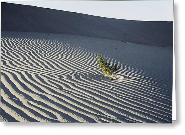 Sand Patterns Greeting Cards - Sand Dunes, Death Valley, California Greeting Card by Marc Moritsch