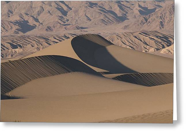 Sand Patterns Greeting Cards - Sand Dunes In Death Valley Greeting Card by Marc Moritsch