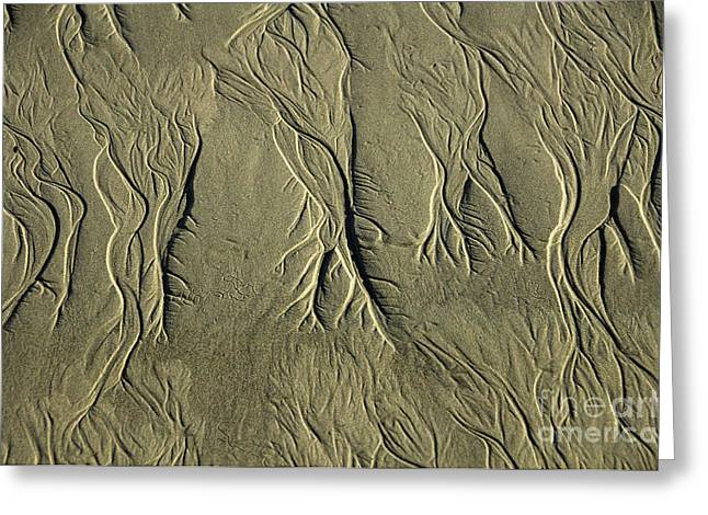 Sand Patterns Greeting Cards - Sand Pattern Greeting Card by Marc Bittan
