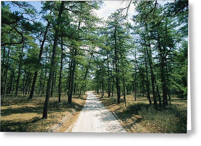 New Jersey Pine Barrens Greeting Cards - Sand Road Through The Pine Barrens, New Greeting Card by Skip Brown