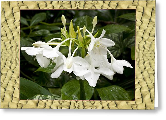Cape Lily Greeting Cards - Sandflow Lilies Greeting Card by Bell And Todd