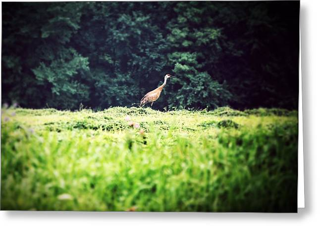 Wisconsin Greeting Cards - Sandhill Crane Greeting Card by Laura Pineda