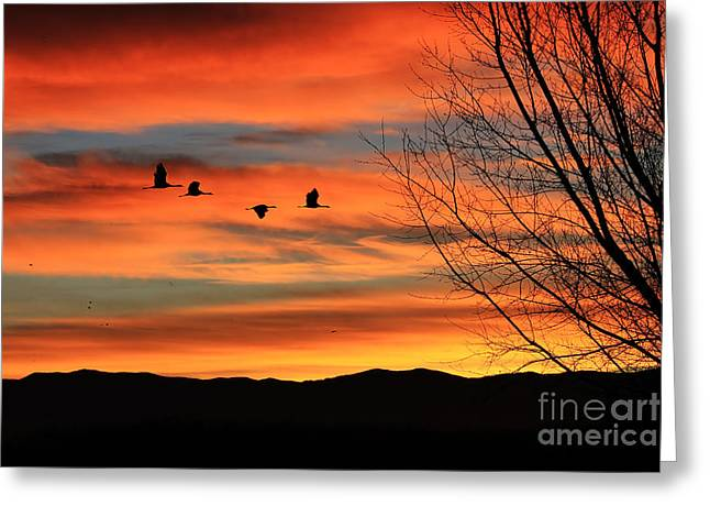 Val Armstrong Greeting Cards - Sandhill Crane Sunrise Greeting Card by Val Armstrong