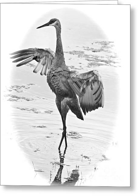 Sandhill Cranes Greeting Cards - Sandhill Lake Greeting Card by Carol Groenen