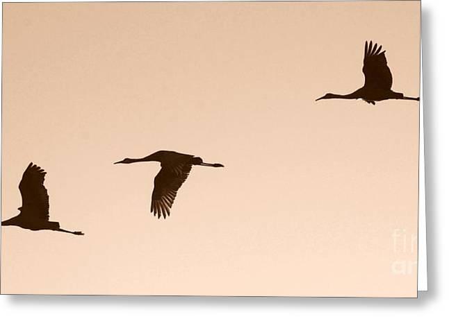 Sandhills Greeting Cards - Sandhills in Flight in Sepia Greeting Card by Carol Groenen