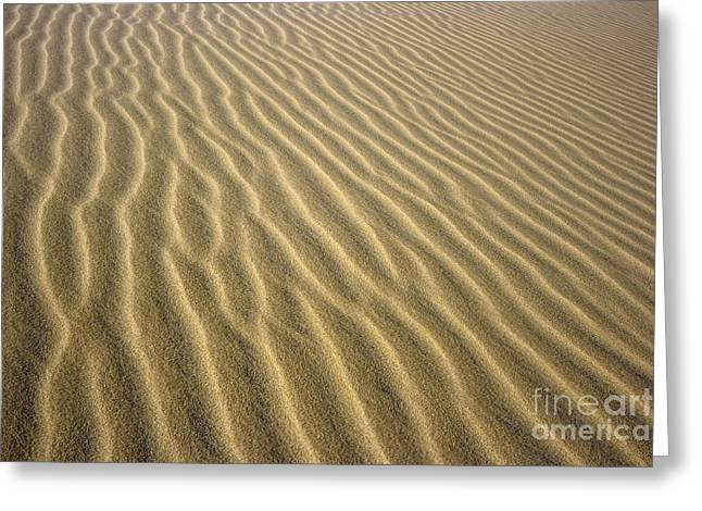 Sahara Sunlight Greeting Cards - Sandhills Greeting Card by MotHaiBaPhoto Prints