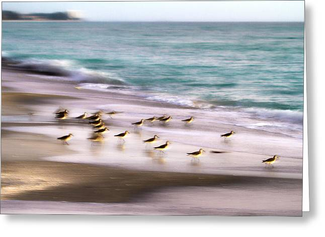 Sand Piper Greeting Cards - Sandpiper Evening Greeting Card by Betsy A  Cutler