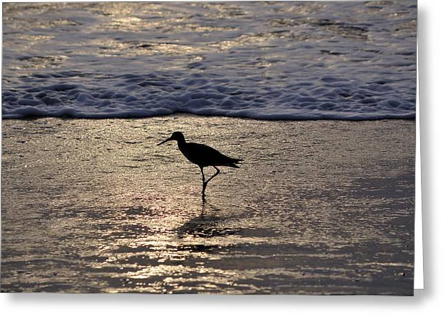 Sandpipers Greeting Cards - Sandpiper On A Golden Beach Greeting Card by Kenneth Albin