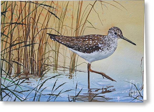 Shore Bird Print Greeting Cards - Sandpipers Bright Shore Greeting Card by James Williamson