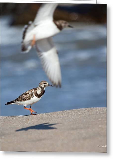 Sandpiper Greeting Cards - Sandpipers Greeting Card by Michelle Wiarda