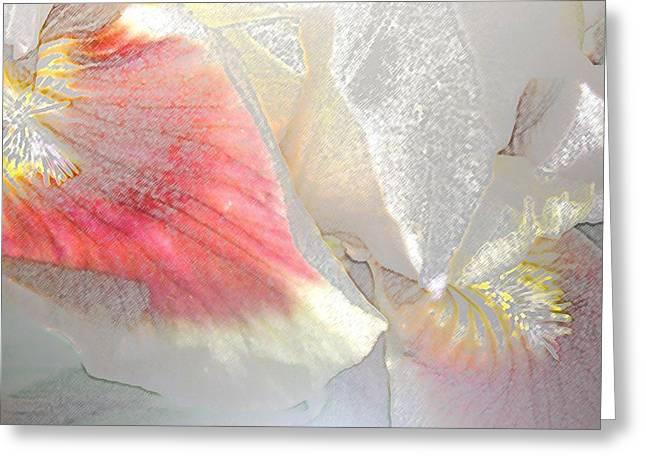 Sangria White Iris Greeting Card by Gretchen Wrede
