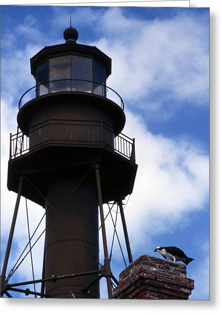 Photos Of Birds Greeting Cards - Sanibel Island Lighthouse Greeting Card by Skip Willits