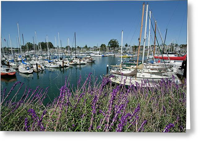 Santa Cruz Sailboat Greeting Cards - Santa Cruz Harbor - California Greeting Card by Brendan Reals