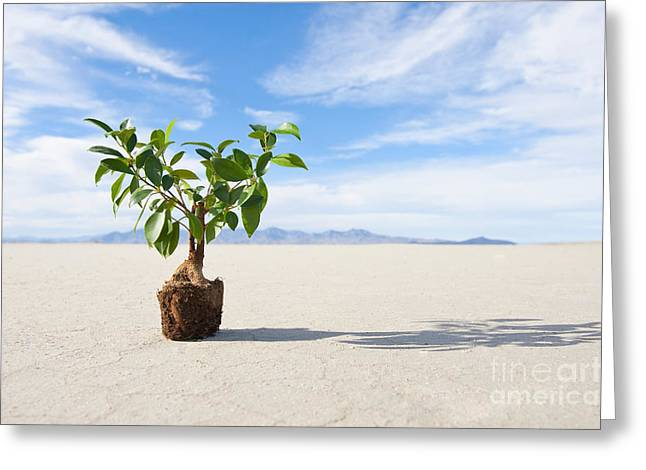 Casting A Shadow Greeting Cards - Sapling on Dry Cracked Mud Greeting Card by Thom Gourley/Flatbread Images, LLC
