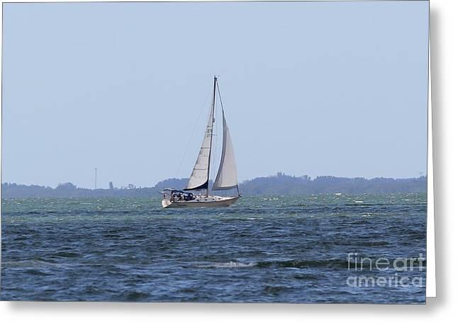 Sarasota Sailing Greeting Card by Theresa Willingham