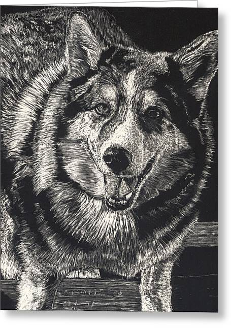 Husky Drawings Greeting Cards - Sarge the Dog Greeting Card by Robert Goudreau