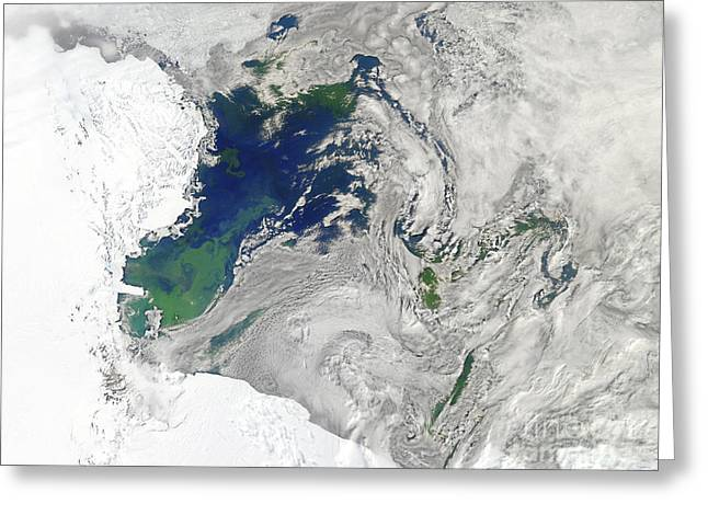 Recently Sold -  - Phytoplankton Greeting Cards - Satellite View Of The Ross Sea Greeting Card by Stocktrek Images