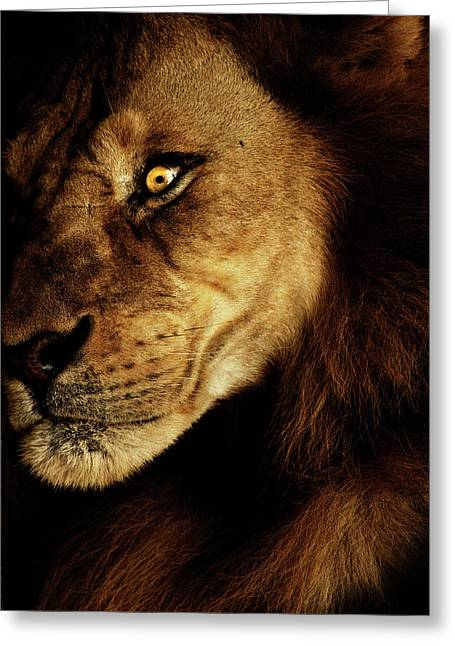 Sri Lanka Greeting Cards - Savage Greeting Card by Andrew Paranavitana