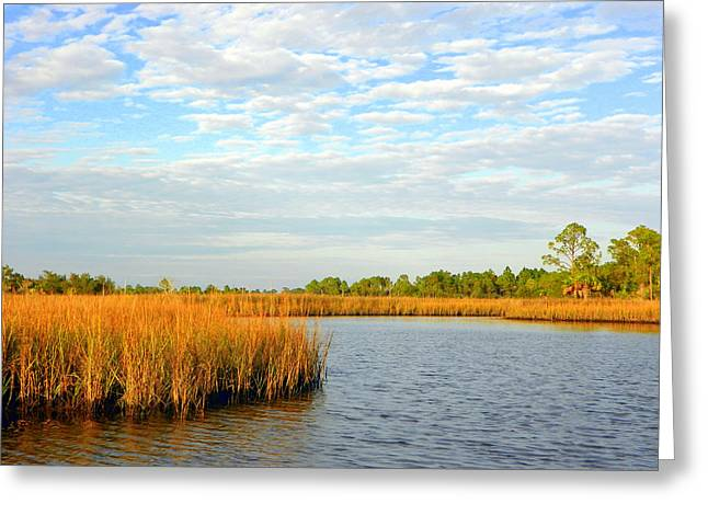 Sunset Greeting Cards Greeting Cards - Sawgrass Creek L Greeting Card by Sheri McLeroy