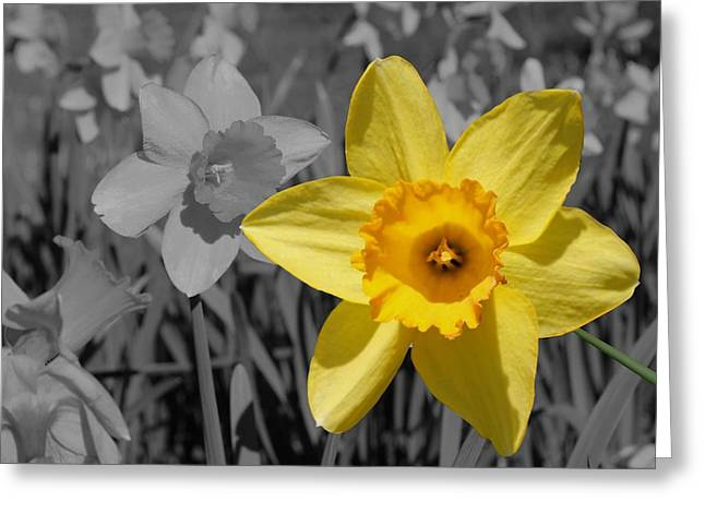 Spring Bulbs Greeting Cards - Say Cheese Greeting Card by Betty Northcutt