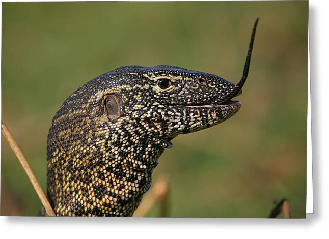 Snake Scales Greeting Cards - Scales For Breakfast Greeting Card by Bruce J Robinson