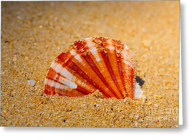 Scallop Shell Greeting Card by Cheryl Young
