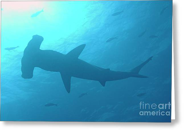 Undersea Photography Greeting Cards - Scalloped Hammerhead shark Greeting Card by Sami Sarkis