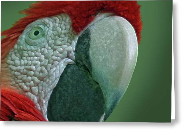 Scarlet Macaw Greeting Cards - Scarlet Macaw 3 Greeting Card by Larry Linton