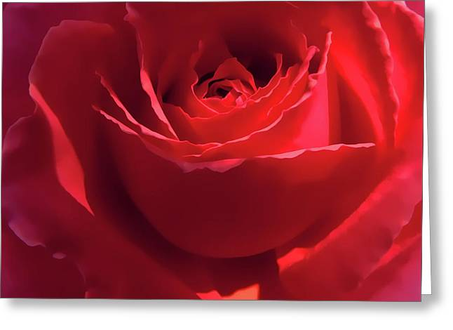 Scarlet Rose Flower Greeting Card by Jennie Marie Schell