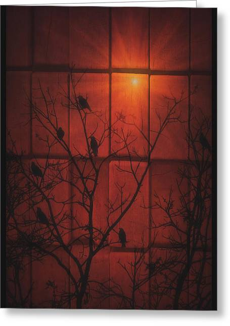 Scarlet Silhouette Greeting Card by Tom York Images