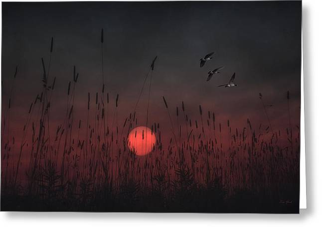 Sunset Posters Greeting Cards - Scarlet Sunset Greeting Card by Tom York Images