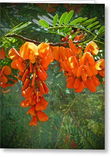 Rattlebox Greeting Cards - Scarlet wisteria tree - Sesbania punicea Greeting Card by Mother Nature