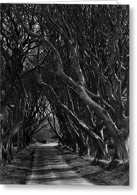 Ballymoney Greeting Cards - Scary pathway Greeting Card by David McFarland