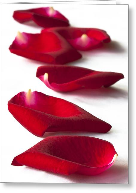 Petal Greeting Cards - Scattered rose petals Greeting Card by Zoe Ferrie