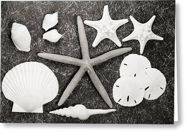 Aquatic Greeting Cards - Scattered Shells II Greeting Card by Bill Brennan - Printscapes